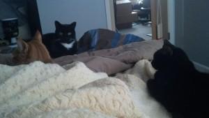 3 cats http://www.BethSawickie.com