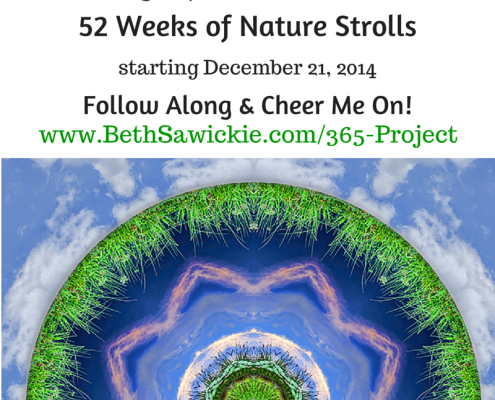 Beth Sawickie's 365 Project