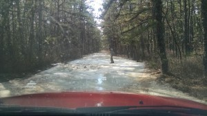 Icy Puddle in Pines - Beth Sawickie