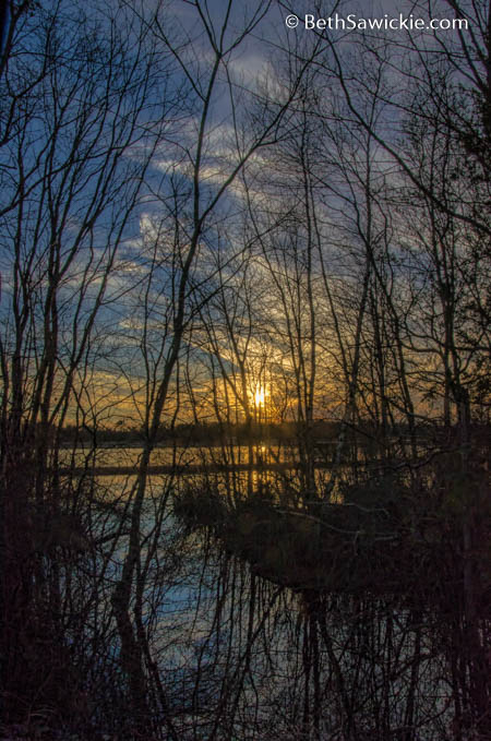 Bare Trees Sunset by Beth Sawickie