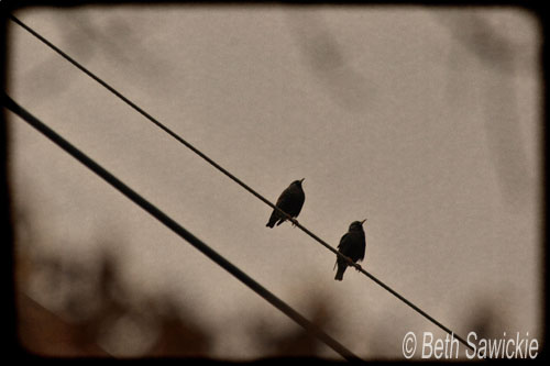 "Image by Beth Sawickie www.BethSawickie.com ""Birds On A Wire"""