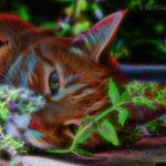 Catnip Chillin by Beth Sawickie