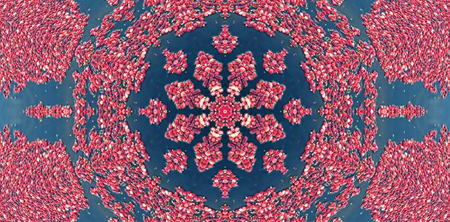Mandala of Cranberries by Beth Sawickie http://bethsawickie.com/mandala-of-cranberries