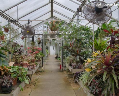 Deep Cut Gardens Greenhouse - Beth Sawickie