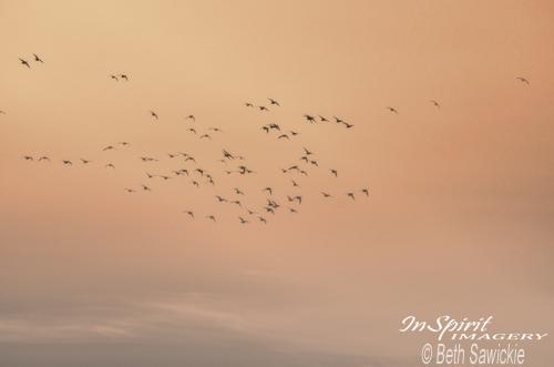 "Image by Beth Sawickie - www.BethSawickie.com ""Seaguls in the Mist"""
