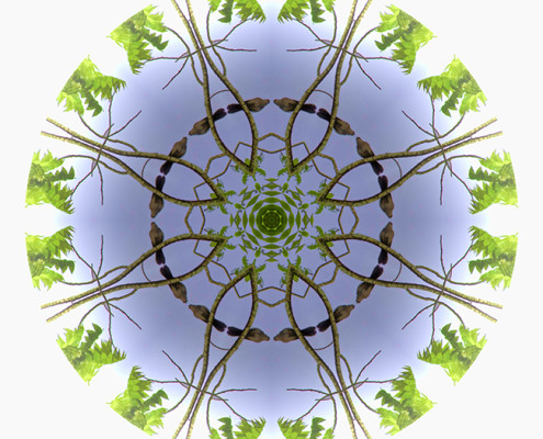 Green Leaves Mandala 2 by Beth Sawickie