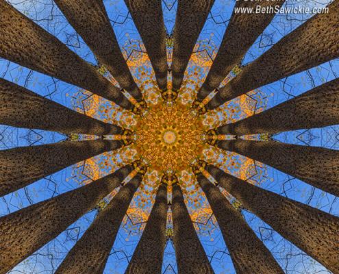 Looking Up Mandala 1 by Beth Sawickie http://www.BethSawickie.com/looking-up-mandala-1