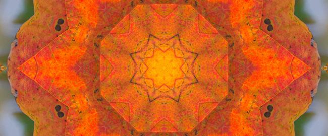 Maple Mandala by Beth Sawickie http://bethsawickie.com/maple-mandala