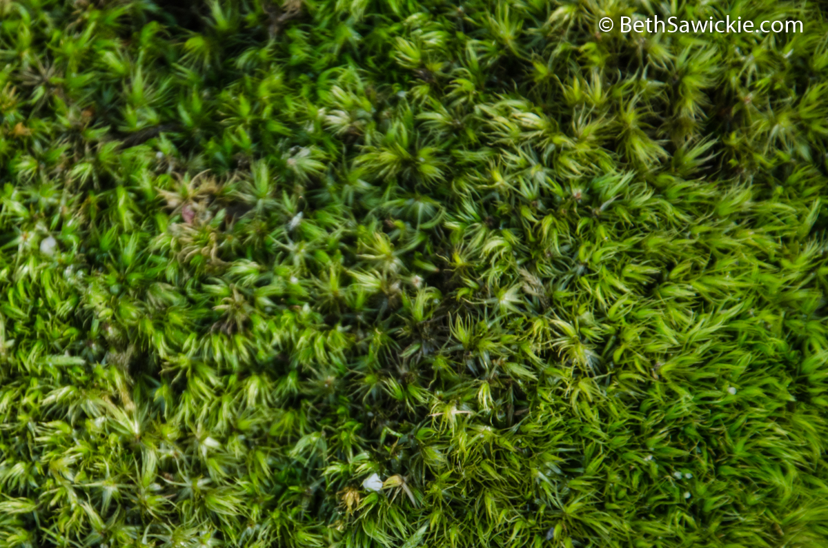 Green Moss by Beth Sawickie