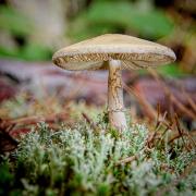 Mushroom One by Beth Sawickie - http://bethsawickie.com/mushroom-1
