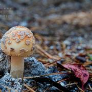 Mushroom 2 by Beth Sawickie http://www.bethsawickie.com/mushroom-2 #mushroom #fungus #mushroomphoto #fungusphoto