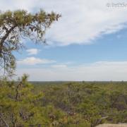 Pygmy Pine Plains 1 - Beth Sawickie