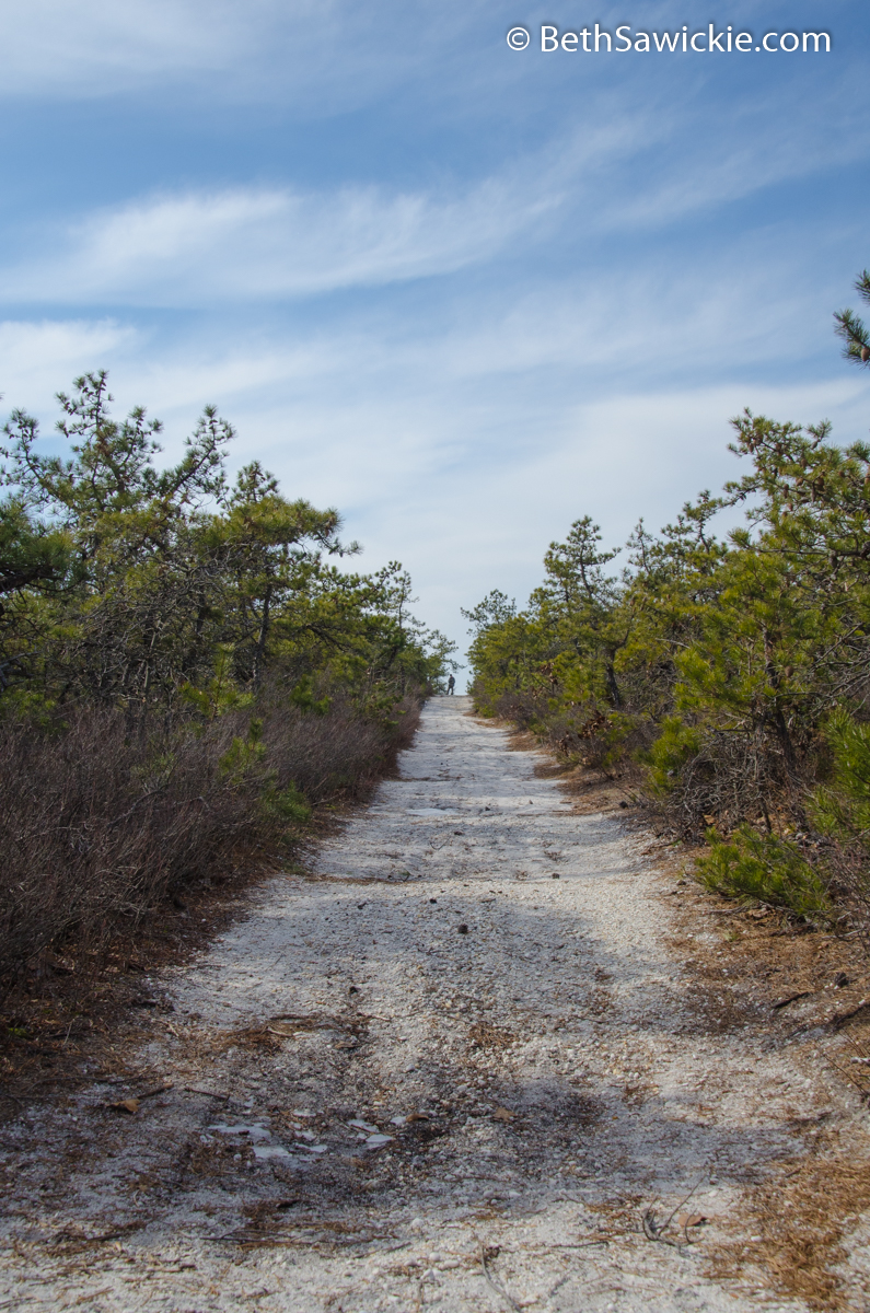 Trail to Spring Hill by Beth Sawickie