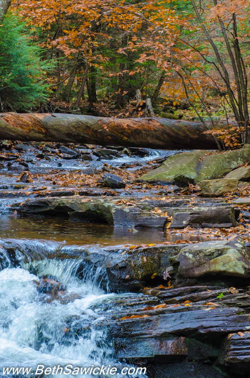 Glen Leigh Scene 1 at Ricketts Glen by Beth Sawickie http://bethsawickie.com/our-ricketts-glen-adventure