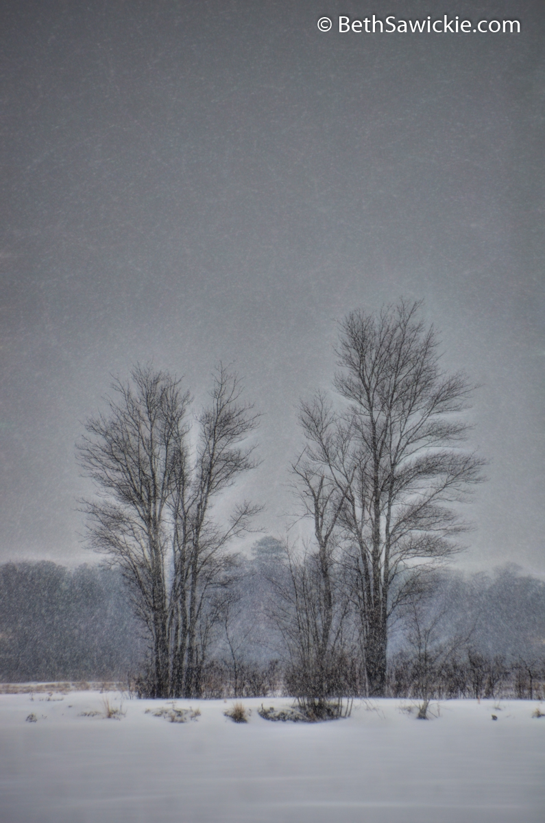 Snow Falling on Bare Trees by Beth Sawickie