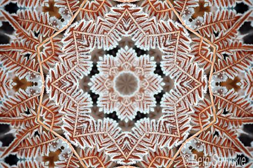 """Image by Beth Sawickie www.BethSawickie.com """"Snowy Fern"""""""