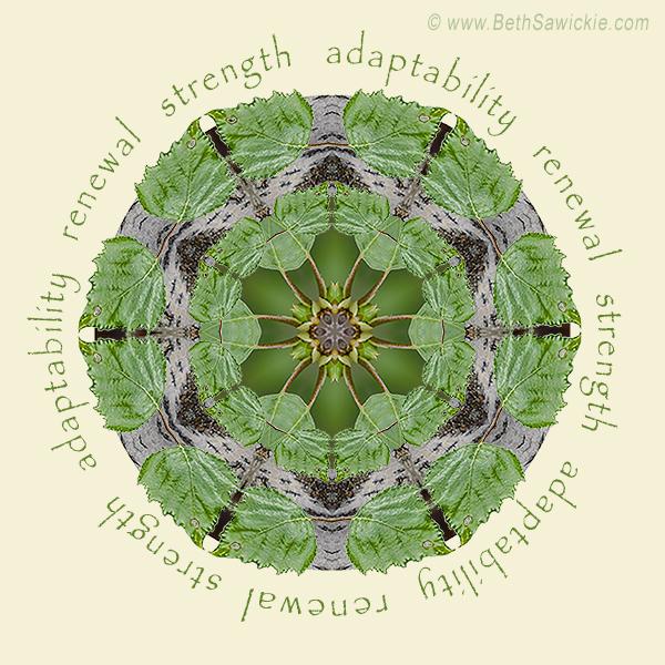 Strength Mandala #1 by Beth Sawickie http://www.bethsawickie.com/strength-mandala-1