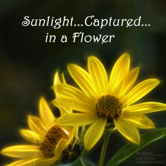"""Image by Beth Sawickie. www.BethSawickie.com/sunlight-captured-in-a-flower  """"Sunlight Captured in a Flower"""""""