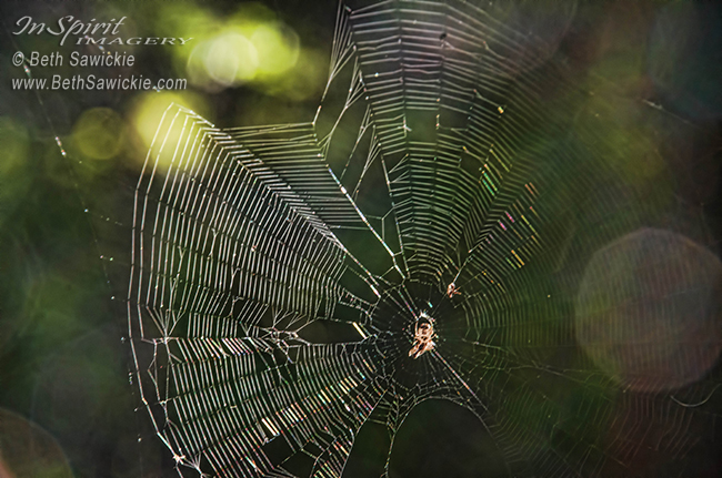 A Web of Her Own by Beth Sawickie http://bethsawickie.com/a-web-of-her-own #spider #spiderweb #web