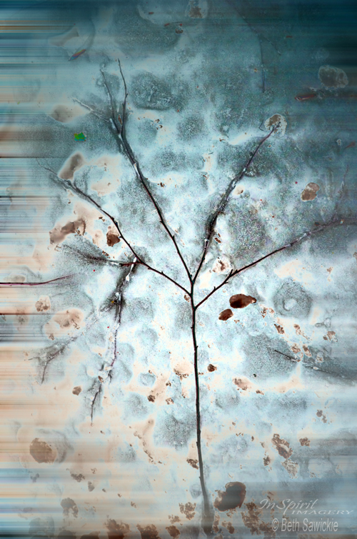 "Image by Beth Sawickie http://www.BethSawickie.com/winter-tree-abstract ""Winter Tree Abstract"""