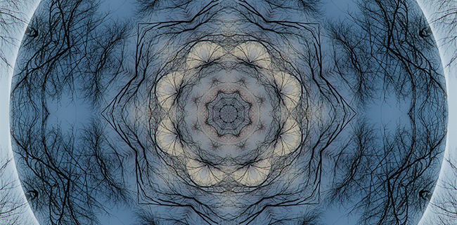 Winter Tree Mandala 1 by Beth Sawickie http://bethsawickie.com/winter-tree-mandala-1